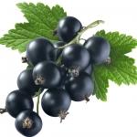 انگور سیاه