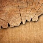 چوب کشمیر