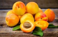 زردآلو؛ طلای میوه های تابستانی